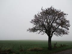 The world is getting lost in the fog (DameBoudicca) Tags: sweden sverige schweden suecia suède svezia スウェーデン lund linero tree träd baum albero árbol arbre 木 fog dimma nebel niebla brouillard nebbia 霧 きり