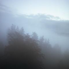 (xbacksteinx) Tags: hasselblad2000fcw 120 mediumformat analog niponkogaku nikkord40mmf4 40mm zörkendörfer converted lens kodak c41 portra160 winter black forest clouds fog foggy moody