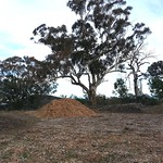 "wood chip pile <a style=""margin-left:10px; font-size:0.8em;"" href=""http://www.flickr.com/photos/61627737@N03/47264707181/"" target=""_blank"">@flickr</a>"