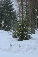 Harz-Oderbrück_e-m10_1012077180 (Torben*) Tags: rawtherapee olympusomdem10 sigma60mmf28dn urlaub vacation harz oderbrück nadelbaum conifer schnee snow winter schild sign