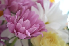flowers March 2019