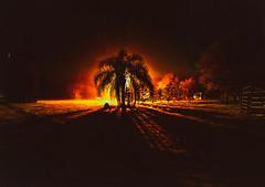 Florida Fire (ashercurri) Tags: light palm tree fog morning early landscape florida myakka city sony a7ii alpha