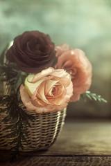 3 roses (Ro Cafe) Tags: edge80 lensbaby roses sonya7iii stilllife flowers macroconverter basquet vintage romantic textured
