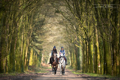 Sade & Galan - Allée (Vincent HEDOU) Tags: horse spring woods girls outdoor light trees sun sunny sunday cheval caballo equin equine bretagne breizh bzh brittany france morbihan lorient finistere
