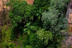 Vegetation @ Tolmer Falls (Markus Branse) Tags: tolmer tolme falls fall wasserfall wasser austral australia australien australie fels natur naturschutz nationalpark lichtfield litchfield park parc idylle outdoor wald forest forrest wood woods schlucht bäume trees tree baum januar january landschaft