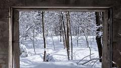 picture window (jtr27) Tags: dscf5439xl jtr27 fuji fujifilm xt20 xf 1855mm f284 rlmois kitlens snow winter landscape newhampshire picture window