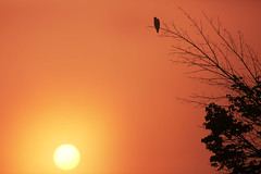 Sunrise (nadeen_aljamal88) Tags: bird birds sunrise sunset sun sky skies skyscape nature naturescape eagle branch standing landing beautiful view vews morning red yellow shine shining early travel canada canadian ontario