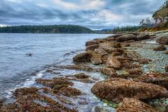 Seaweed rocks Nanaimo 2 (kellypettit) Tags: nanaimo vancouverisland rockybeach westcoast landscape ocean sea smalltown