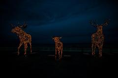 #Trelche (pyrolim) Tags: travemünde trelche elche illumination kunst