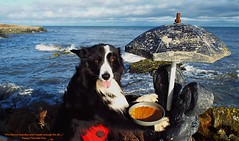 Happy Pancake Day (ASHA THE BORDER COLLiE) Tags: pancake day shrove tuesday funny dog picture border collie statue seascape ashathestarofcountydown connie kells county down photography