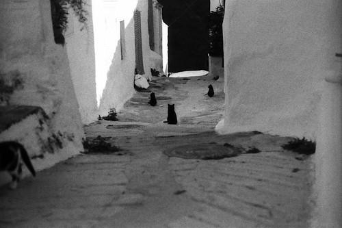 de zwarte katten