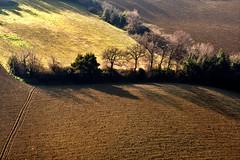confini (luporosso) Tags: natura nature naturaleza naturalmente nikon nikonitalia nikond500 colline hills alberi trees terra earth scorcio country countryside terraarata plowedland marche italia italy