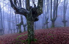 OFFERING TO THE STORM (juan luis olaeta) Tags: paisajes landscape forest bosque basoa hayedo pagoa natura fog foggy canoneos60d canon nieblas laiñoa photoshop lightroom urkiola basquecountry