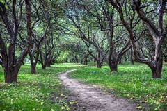 Apples fall (KonstEv) Tags: leaves tree apple apples pathway trail russia zeiss makroplanar