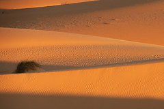 Lines and shadows (s_andreja) Tags: mauritania sand dune desert sunset golden shadow line