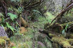 La Réunion - Forêt de Bébour-Bélouve (Michael.Kemper) Tags: eos 6d ef 1635 16 35 f4 f 4l is usm voyage travel travelling reise vacation urlaub frankreich france île de la réunion reunion indian ocean indischer ozean océan indean maskarenen maskarenische inseln insel mascarene island islands mascareignes 6 d canon forêt bébourbélouve bébour bélouve bebour belouve foret forest wald regenwald urwald dschungel jungle rain hike hiking wanderung wandern randonnée randonnee coteau maigre regen green grün