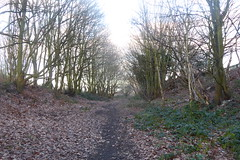 Old railway cutting, Athersley North, Barnsley. (former Carlton branch line)   January 2019 (dave_attrill) Tags: cutting athersley north branch carlton disused railway line trackbed remains abandoned footpath barnsley southyorkshire yorkshire grass trees overgrowth vegetation january 2019