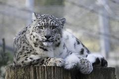 Marwell Zoo Jan 2019 (nicbridgephotography) Tags: marwell zoo animals park southampton