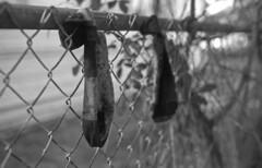 Dirty Socks (PositiveAboutNegatives) Tags: nikon slr nikonf vintagecamera eyelevel plainprism cosinavoigtlander cv40mmf2ultron film analog foma fomapan fomapan200 rodinal coolscan lakeworth florida