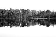 L1780029 (.rog3r1) Tags: spiegelung leica m8 rotenburg bullensee bw sw black white schwarz weiss landscape