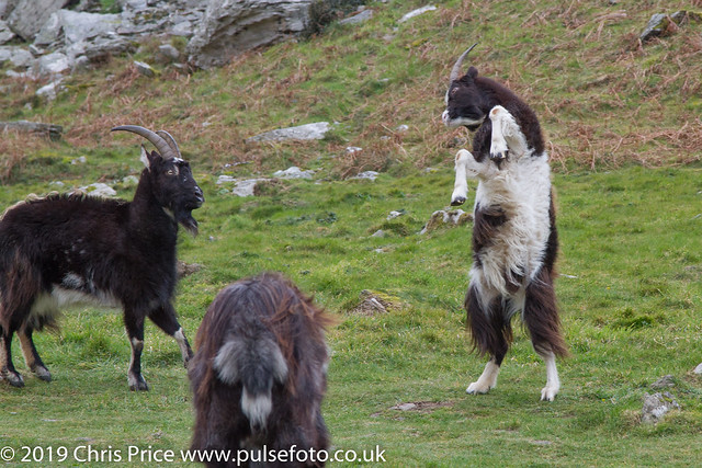 Goat Rut, Valley of the Rocks