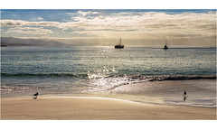 Seaside (niggyl (well behind)) Tags: leica leicam240mp leicamp m240 rangefindercamera rangefinderlens leicadigital contax contaxcarlzeiss contaxglenses contaxg35mmf20 contaxg legacyglass legacylenses vintagelenses manualfocus manualondigital classicalglass nikcollection nikcolorefexpro colorefexpro tasmania bichenotasmania waubsbay jettybay tasmansea seaside summer sunshine beach sea ocean boats seagull contrejour backlit backlighting frankenzeiss