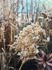 Sunroom-detail (Joyflea) Tags: rone empire burnhambeeches sherbrooke