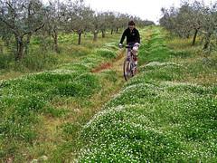 Cervar biking (Vid Pogacnik) Tags: croatia hrvatska istra istria cervar červar biking