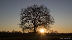 DN9A9501 (Josette Veltman) Tags: sunrise zonsopkomst silhouette tree boom salland raalte heino zon ochtend morning contrast