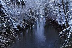 Rivière sous frondaison enneigée (DOMVILL) Tags: arbre domvill eau france neige nord wwwflickrcompeoplevildom rivière lamarque