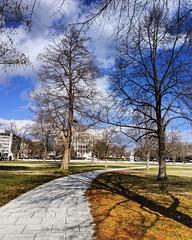 winter shadows (ekelly80) Tags: dc washingtondc january2019 winter ellipse walk winterwalks shadows trees path sidewalk sky light curve
