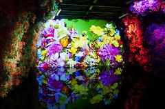 2018 Taichung World Flora Exposition - 25 (葉 正道 Ben(busy)) Tags: 2018年台中世界花卉博覽會 2018taichungworldfloraexposition 台中 台灣 博覽會 花卉 花 后里區 houlidistrict taichung taiwan flora exposition 花卉博覽會 flower butterflyorchid orchid 蘭花