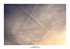 A flock of seagulls (Ignacio Ferre) Tags: cielo sky nikon gull seagull flock bandada aves pájaros animal gaviota sunset puestadesol anochecer manzanareselreal embalsedesantillana españa spain