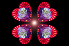 still-life 19-02-2019 016 (swissnature3) Tags: stilllife macro flowers rose light heart love photoshop