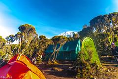 _FOU9678.jpg (Murray Foubister) Tags: africa gadventures spring treking tanazania flora travel 2018