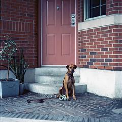 Murphy (Brjann.com) Tags: extras 120 film mamiya c330 medium format analog kodak ektar tlr twin lens reflex portrait dog