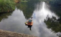2017-09-11 | heron on duck house – Heron island (Mark & Naomi Iliff) Tags: river thames caversham heron