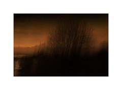 Fading-Light (ICM's) Tags: icm intentionalcameramovement painterly multipleexposure longexposure landscape blur abstract woodland trees
