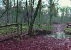 Un ricon del bosque (azucena G. De Salazar) Tags: color fall euskalherria euskadi basquecountri bizkaia forest otxandop basoa bosqie erreka río puente zubia bridge