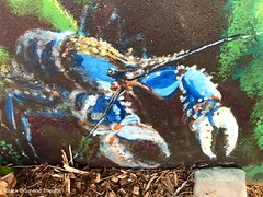 Euastacus sulcatus - Lamington Crayfish - Ages of the Tweed Mural, Commercial Road, Murwillumbah, NSW (Black Diamond Images) Tags: agesofthetweedmural jurassic jurassicperiod megafauna earthlearning mural art painting floodmitigationwall commercialrd commercialroad murwillumbah nsw murwillumbahartstrail appleiphone7plus iphone7plusbackdualcamera iphone7plus phone7plus iphone appleiphonepanorama panorama iphonepanorama appleiphone7pluspanorama euastacus euastacussulcatus lamingtoncrayfish crayfish