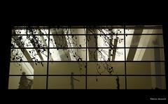 _La marche des statues (Marie-Anne K) Tags: musée statuts nuit grenoble