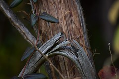 Breaking Branch (filmcrazy1014) Tags: nikon nature wildlife outdoor macro detail tree treebranch branch wood woods forest brown grey green abstract texture breaking split break yellow