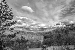 Monochrome Forest (Picturavis) Tags: bw kaldauen siegburg wald schwarzweis blackandwhite forest himmel sky trees bäume germany deutschland picturavis clouds wolken