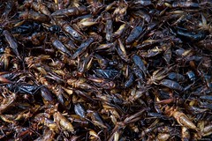 IMGP1354 Fried Crickets (Claudio e Lucia Images around the world) Tags: siemreap cambodia seam reap spiders crickets grasshopper scorpions bugs market street cambogia insects food localfoods people lady pentax pentaxkp pentax18135 pentaxart pentaxlens roadmarket road happyplanet asiafavorites