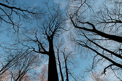 Trees in the Sky (Dimi Alexeyev) Tags: saintpetersburg winter daytime sunny fujifilm fujinon xf 1024 xt1 alexander nevsky lavra monastery trees boughs sky blue