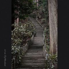 奥の院への石段 (Eiji Murakami) Tags: japan nara winter sony rx100m6 日本 奈良 冬 室生寺