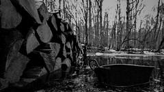 La bassine (Un jour en France) Tags: canonef1635mmf28liiusm canoneos6dmarkii noiretblancfrance noiretblanc bassine bassin forêt bois