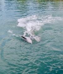 🐬 Dolphin Cove 🐬 (Demonizar) Tags: waterworld dolphincove dolphin dolphins