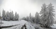 Iced (Lolo_) Tags: panorama lajoueduloup dévoluy hautesalpes randonnée pines snow ice fog
