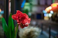 DSCF6124 (::nicolas ferrand simonnot::) Tags: flower plant weed close up closeup bokeh depth field light night color flare vintage manual german fixed length prime lens west germany profondeur de champ effet nature flou extérieur wow fleur plante macro jardin leitz summilux r 50mm f14 6 blades iris leica paris